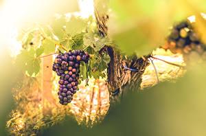 Картинки Виноград Листья Еда