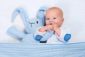 Картинка Зайцы Игрушки Грудной ребёнок Дети