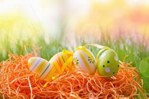 Фотографии Праздники Пасха Яйца Дизайн Сено