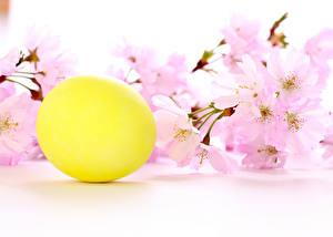 Фотографии Праздники Пасха Яйца Желтый