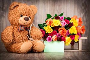 Фото Праздники Розы Мишки Шаблон поздравительной открытки Доски Цветы