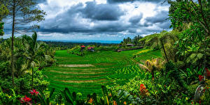 Картинка Индонезия Тропики Поля Облачно Bali Природа