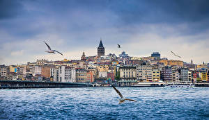 Картинка Стамбул Турция Здания Речка Чайка Мосты Корабли Города