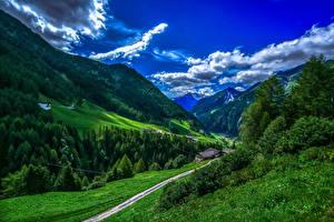 Фотография Италия Горы Леса Небо Пейзаж Траве Облако Bolzano Природа