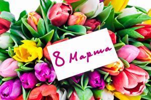 Фотографии 8 марта Тюльпаны Русские Цветы
