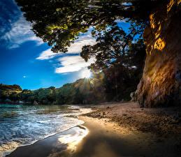 Картинки Новая Зеландия Побережье Ствол дерева Лучи света Tasman Природа
