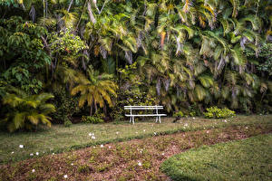 Фотография Парки Пальмы Скамейка Palm garden Maison Eureka Mauritius Природа