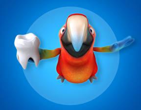 Картинка Попугаи Птицы Цветной фон Зубы Клюв 3D Графика