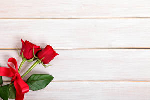 Фотография Розы Доски Двое Красный Бантик Шаблон поздравительной открытки Цветы