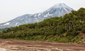 Картинка Россия Горы Леса Камчатка Природа