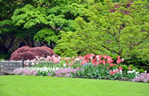 Обои Весна Тюльпаны Парки Природа