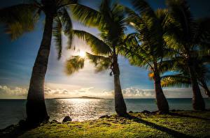 Картинка Тропики Побережье Пальмы Samoa Природа