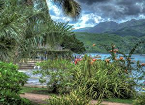 Картинки Тропики Горы Гавайи Кусты HDR Природа