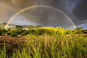 Обои Тропики Небо Кусты Трава Радуга Mauritius