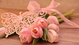 Фотография Тюльпаны Бабочки Доски Розовый Цветы