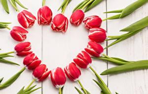 Фото Тюльпаны Сердце Красный Шаблон поздравительной открытки Цветы