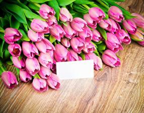 Картинка Тюльпаны Розовый Шаблон поздравительной открытки Цветы