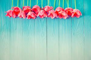 Фото Тюльпаны Доски Розовый Шаблон поздравительной открытки Цветы