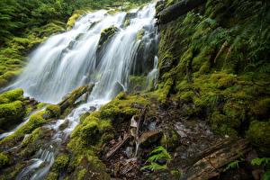 Картинки США Водопады Мох Upper Proxy Falls Oregon Природа