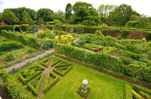 Фотографии Великобритания Сады Дизайн Газон Кусты Middlethorpe Hall gardens York Природа