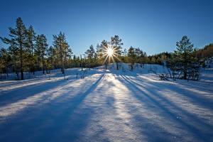 Картинки Зимние Рассветы и закаты Снег Деревья Солнце