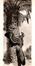 Фотографии Древние животные Zdenek Burian Пальмы Черно белое Archaeopteryx climb Животные