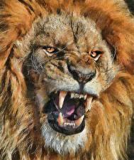 Картинка Большие кошки Львы Клыки Крупным планом Рисованные Морда Оскал Смотрит Животные