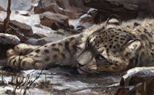 Картинка Большие кошки Ирбис Рисованные