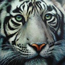 Картинки Большие кошки Тигры Крупным планом Рисованные Взгляд Морда Усы Вибриссы Животные