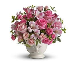 Фотографии Букеты Розы Альстрёмерия Белый фон Ваза Цветы