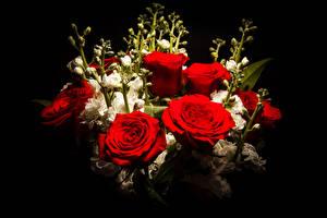 Картинка Букеты Розы Маттиола Черный фон Красный
