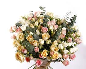 Фото Букеты Розы Белый фон Цветы