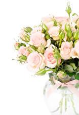 Обои Букеты Розы Белый фон Бутон Цветы