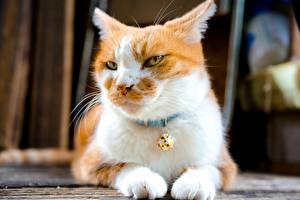 Фото Кошки Смотрит Лапы