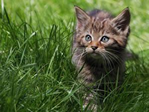 Фото Кот Котята Смотрит Траве Животные