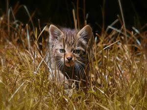 Картинка Коты Котята Трава Животные
