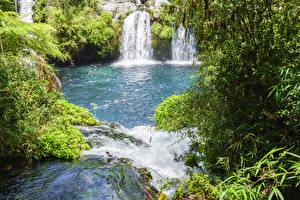 Картинки Чили Парки Водопады Кусты Conguillio National Park
