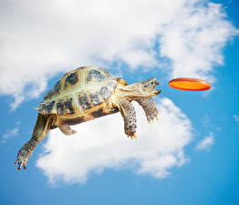 Картинки Креатив Черепахи Небо Полет Прыжок Животные