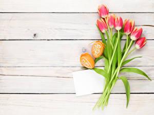 Фотография Пасха Тюльпаны Доски Яйца Шаблон поздравительной открытки Цветы