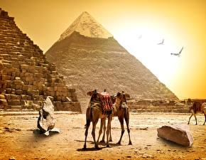 Фотографии Египет Верблюды Камни Пирамида Cairo Природа