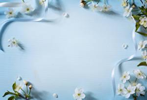 Фото Цветущие деревья Шаблон поздравительной открытки Ленточка Лепестки Цветы