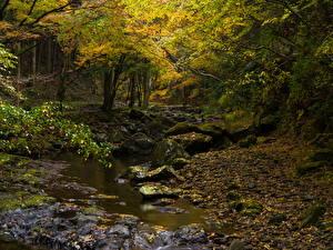 Фотографии Леса Камни Осень Деревья Ручей Мох Природа
