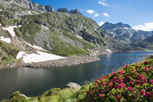 Картинки Франция Горы Реки Рододендрон Мох Ariege Midi-Pyrenees Природа