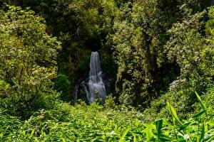 Картинка Франция Водопады Кусты Reunion