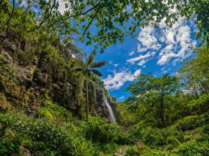 Фотография Франция Водопады Скала Деревья Кусты Ste-Rose Reunion Природа