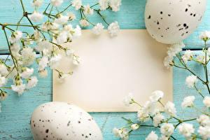 Фото Праздники Пасха Цветущие деревья Яйца Шаблон поздравительной открытки