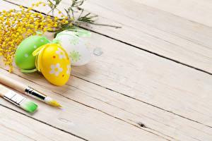Обои Праздники Пасха Мимозы Доски Яйца Трое 3 Животные картинки