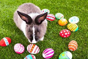 Обои Праздники Пасха Кролики Яйца Трава Животные картинки