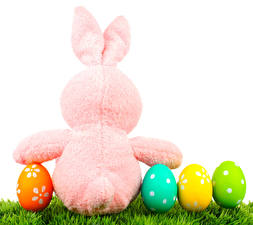 Обои Праздники Пасха Кролики Белый фон Яйца Трава картинки
