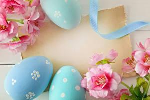 Фотография Праздники Пасха Шаблон поздравительной открытки Яйца